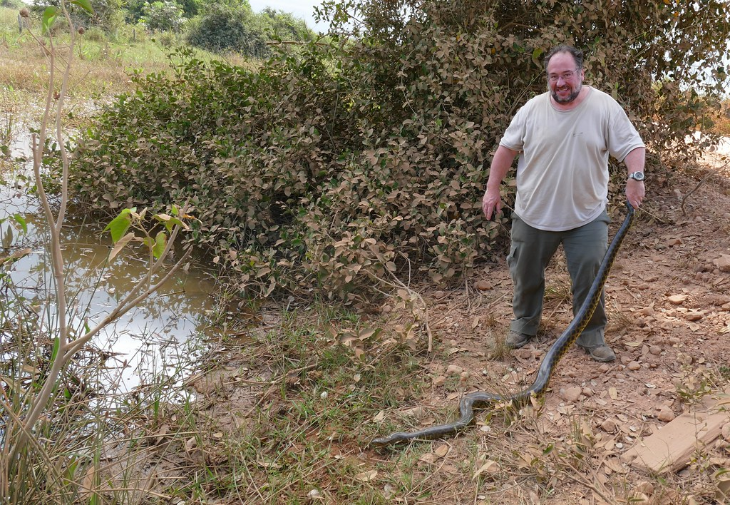 Yellow Anaconda (Eunectes notaeus) held by some stupid tourist (Me !!!)
