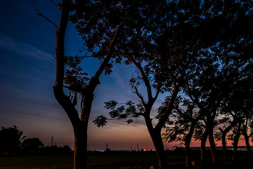 sunset tree night canon landscape taiwan 60d