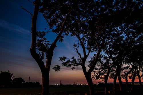 sunset tree night canon landscape taiwan 60d