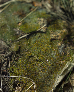 Underfoot forest