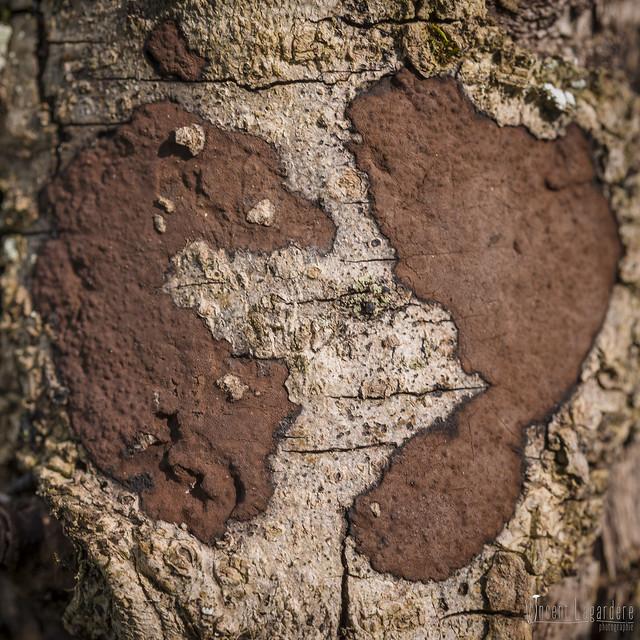 Fungi's rorschach test (