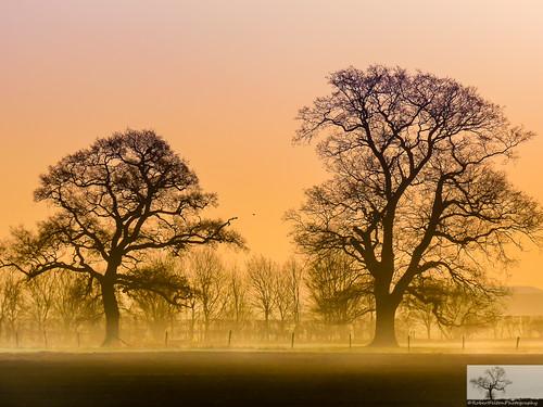 trees sky sun mist tree fog skyline sunrise bedford dawn bedfordshire felton shilhouette bedfordroad cardington robertfelton
