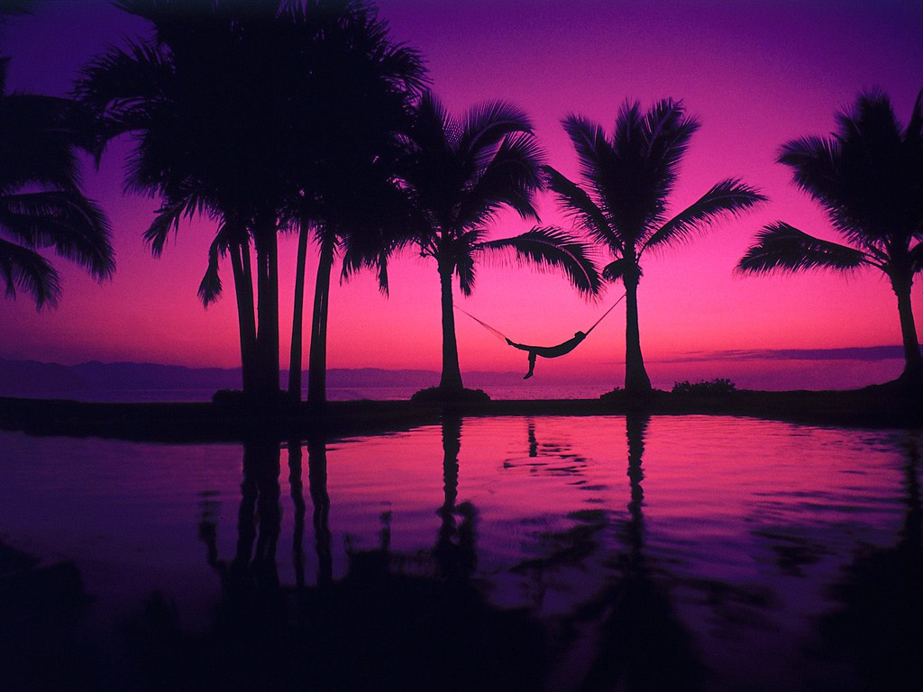 Purple Beach Sunset With Palm Trees Wallpaper Cool Free Flickr