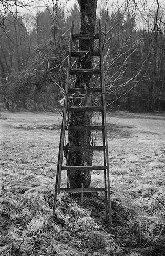 Day 89 _  climb the social ladder | by Daniel Nowak