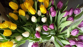 Spring Tulips | by ComeUndone