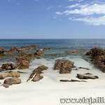 Viajefilos en Australia. Kangaroo 69