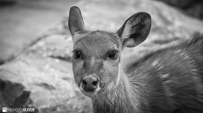Safaripark Beekse Bergen - 0243