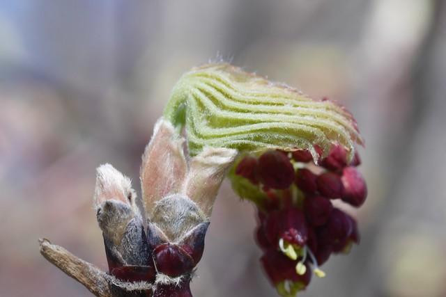 木, 2015-04-16 14:33 - Brooklyn Botanic Garden
