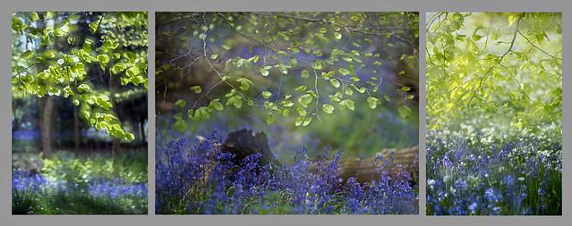 Emmetts Garden, double exposure.