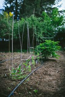 Spring Garden by Eva Kosmas Flores | Adventures in Cooking | by Eva Kosmas Flores