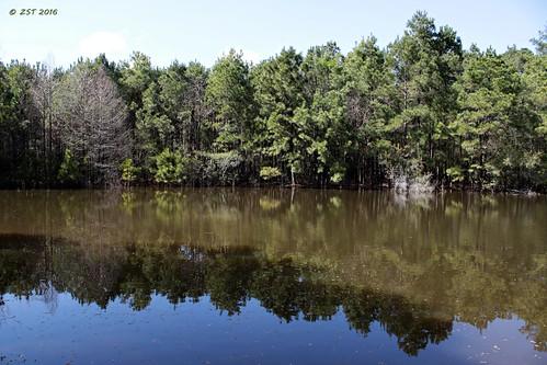 trees lake nature reflections texas naturetrail thewoodlands shadowlake shadowbendpark zeesstof lakemargin