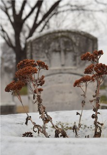 Grave | by augustinecollective