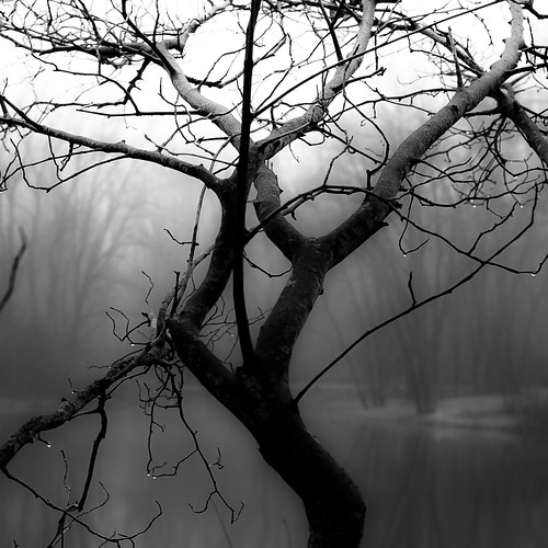 d5000 nikon abstract blackwhite branches bw droplets fog foggy forest landscape light monochrome natural noahbw pond spring square trees water waterdrops wet woods blackandwhite captaindanielwrightwoods waltham12 waltham6