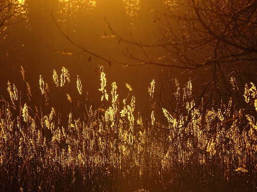 sunset lake reed nature sunshine spring sony latvia aluksne latvija pavasaris daba ezers saulriets niedres alūksne hx400v