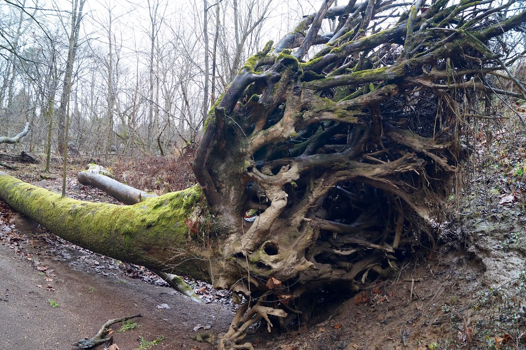 Wesley Chapel Gulf | Hoosier National Forest - Indiana | The Cut