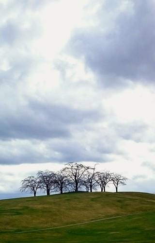 treesskynatureswedengrass