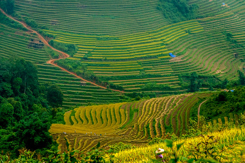 Rice Terrace Fields 2 | by Eustaquio Santimano