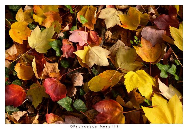 _DSC2335pf Autumn