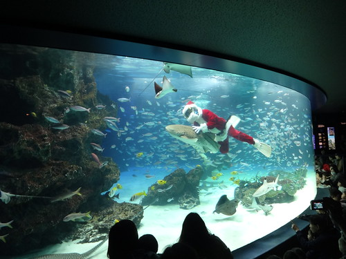 Santa swims with the sharks at Sunshine aquarium | by wombatarama