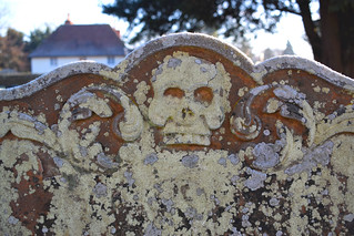 frosted and lichened skull (18th Century)