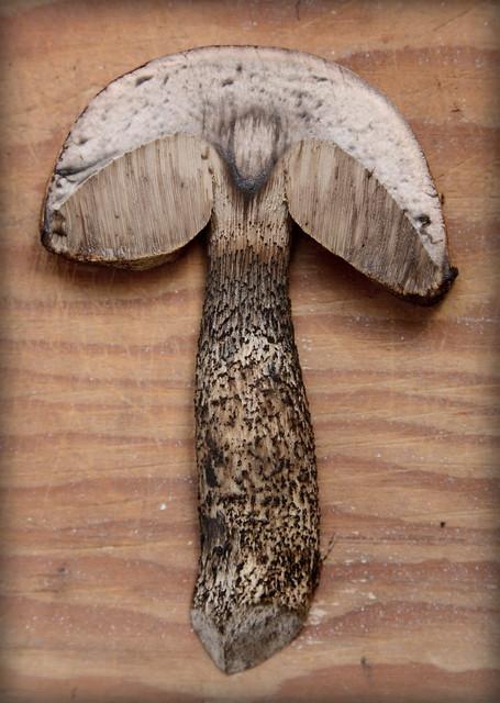 Slice of Leccinum versipelle, Convict Lake, California