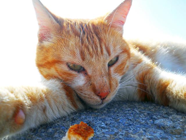 Bostancı Cat