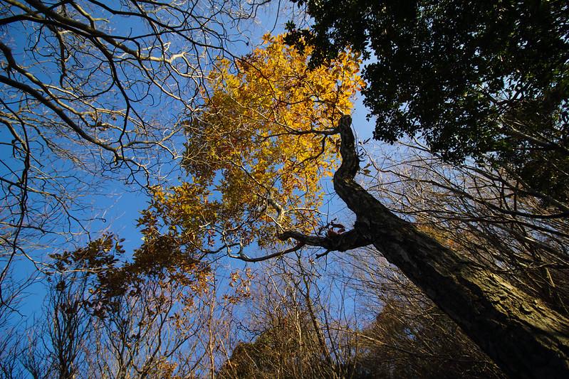 20141124-曽爾高原-0145.jpg