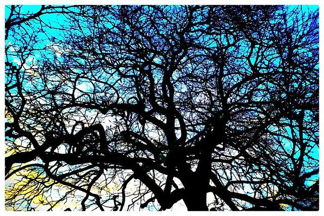 Scrabbling blue...