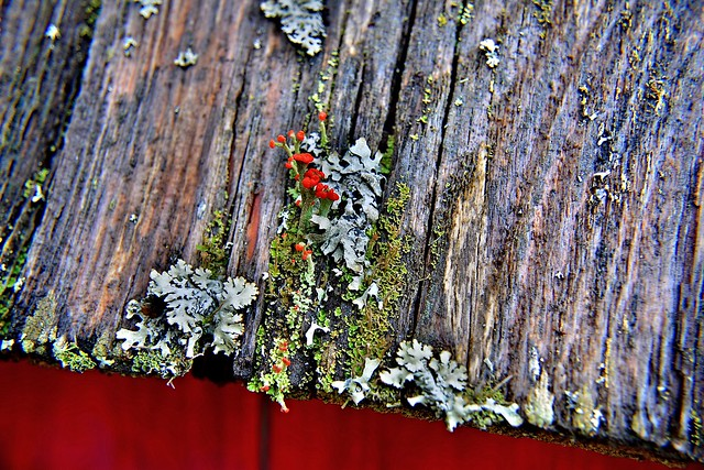 Moss and Fungi on the Roof Boards