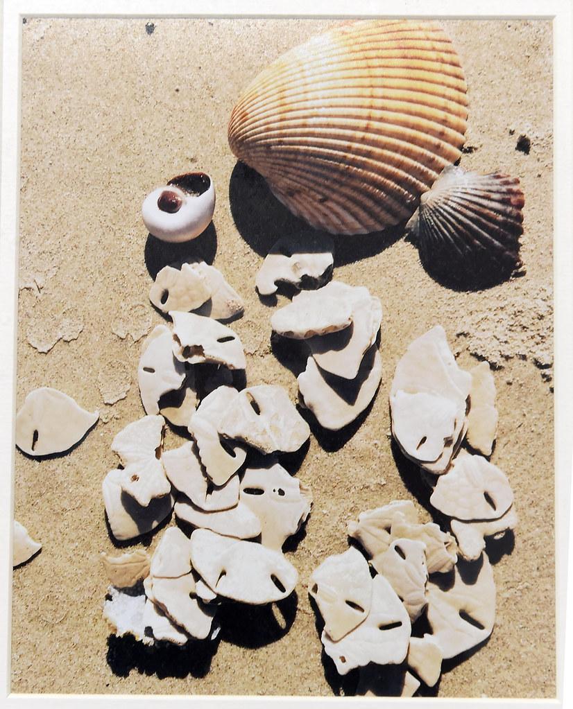 shells-on-the-beach_26276688452_o