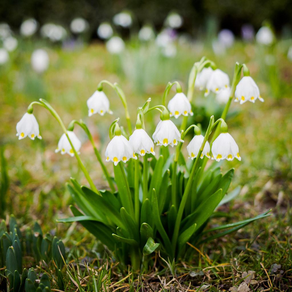 056/365: Spring Snowflake