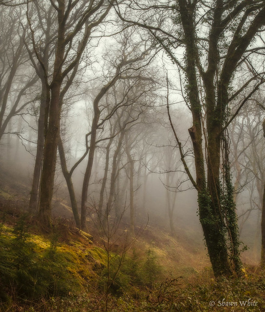 Mist in the Valley Wood