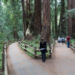 Cathedral, Muir Woods