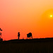 Sunset in my village. by Ngocchau Media