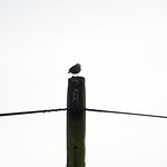 Symmetry and Starling