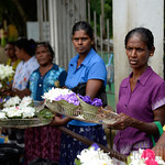 14 Viajefilos en Sri Lanka. Yala 40