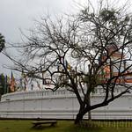 02 Viajefilos en Sri Lanka. Anuradhapura 12
