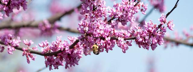 Spring in Kansas