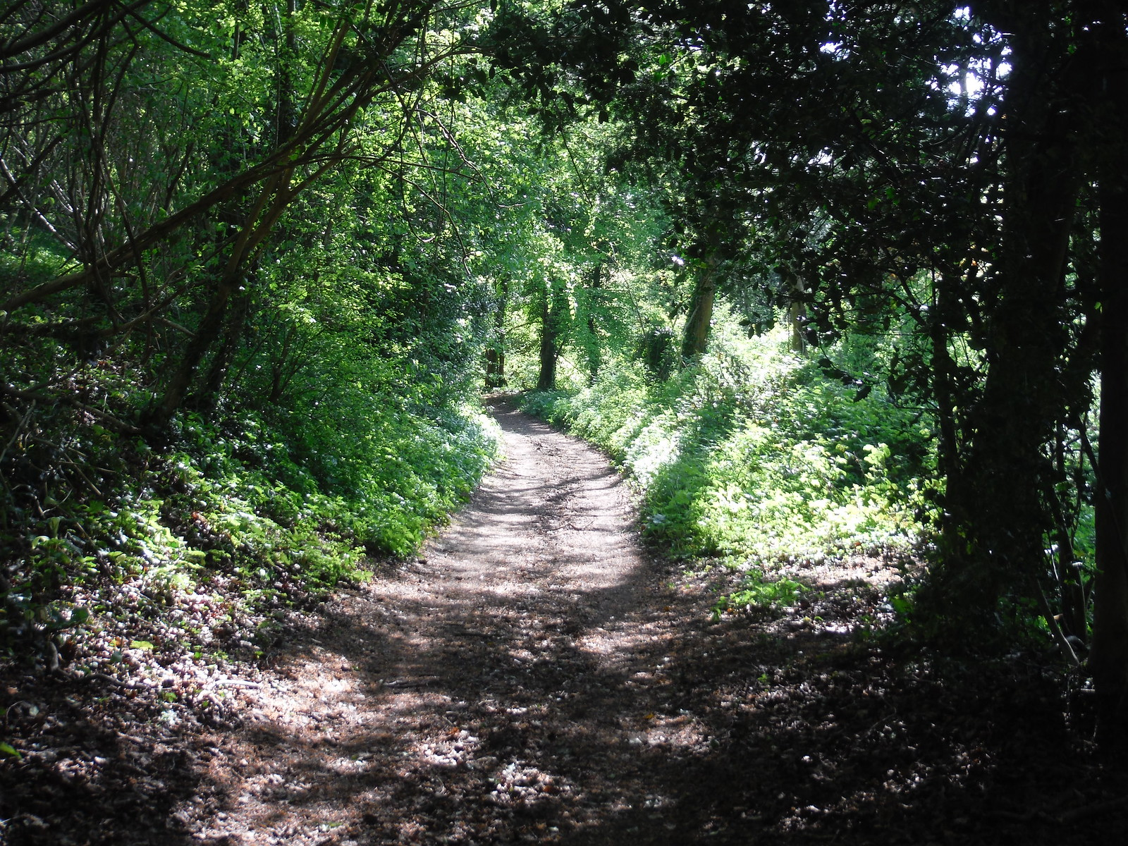 Path through East Hanger SWC Walk Rowlands Castle Circular
