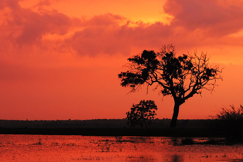 travel ceylon uva uvaprovince wetlands srilanka grasslands southasia asia lake weerawilalake outdoor landscape water sky sunset bright colour purple red blue cloud clouds tree trees plant serene dusk field dnysmphotography dnysmsmugmugcom