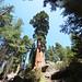 Sequioa & Kings Canyon National Parks, foto: Karel Janů
