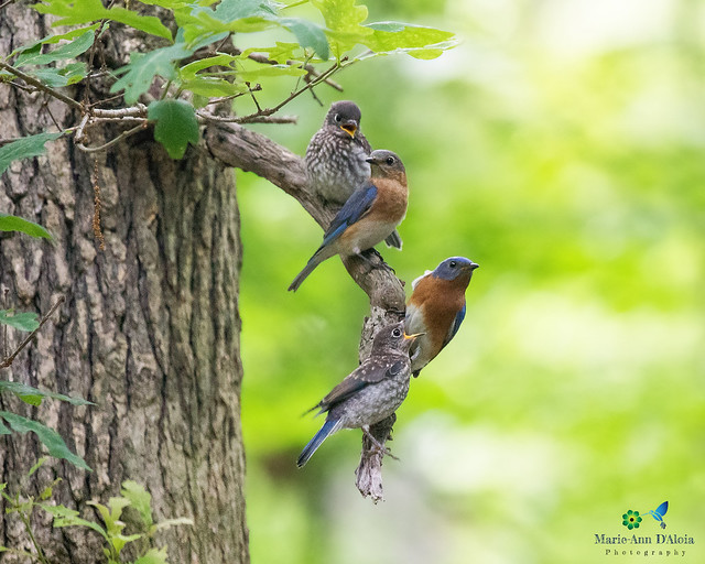 Meet The Bluebirds!