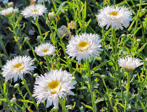 summer white plant flower green field yellow landscape pattern outdoor sunny arboretum