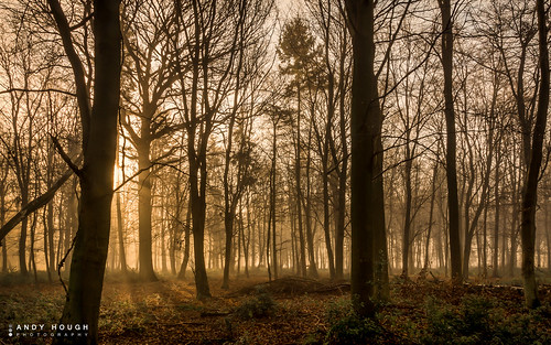wood morning trees england mist sunrise woodland unitedkingdom sony a77 ashampstead sonyalpha andyhough slta77 norcotwood andyhoughphotography