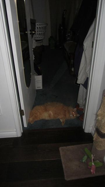 IMG_0622 Dewey in bedroom doorway