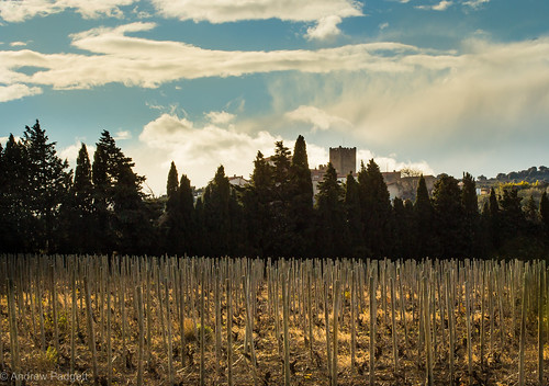 travel trees sunset sky sun sunlight france clouds canon landscape evening vineyard europe mediterranean grapes chateau roussillon languedoc 6d ef70200mm cstle