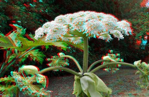 Beware!! Heracleum Sphondylium 3D