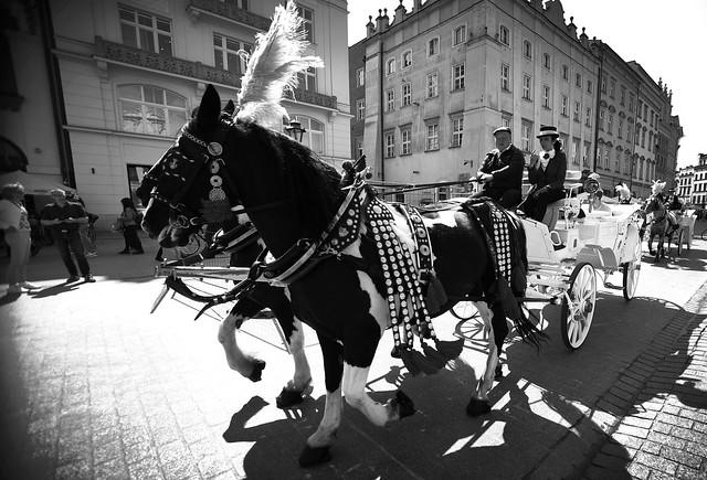 Tourist chariots