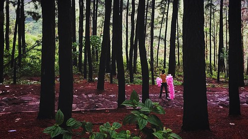 boy lines square woods forrest cotton squareformat cottoncandy magical intothewoods iphoneography instagramapp