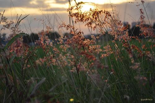 sunset nature grass glow